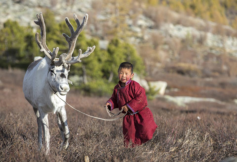 Life with the Reindeer: