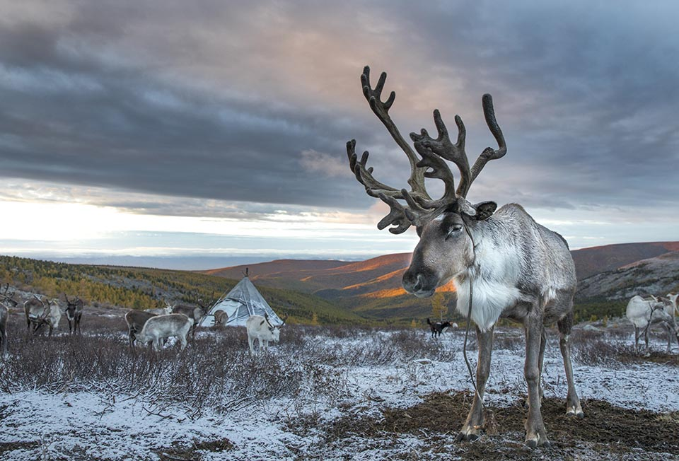 "Life with the Reindeer: ""Dukha"""