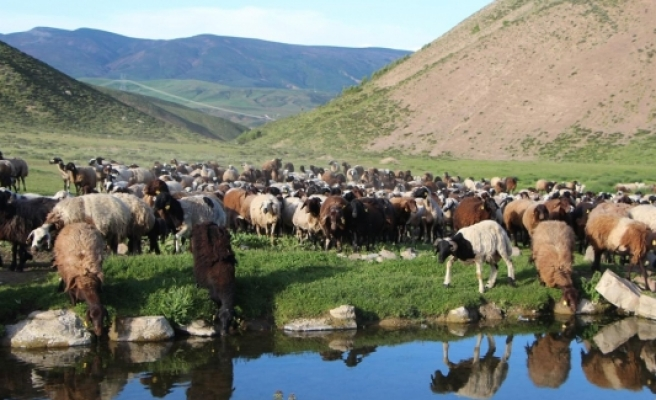 Cattle-breeding started in highlands freed from the terrorists