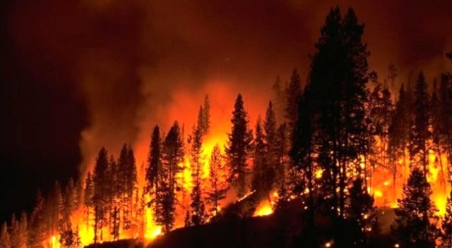 Over 100 Thousand Hectares Of Forest Burned out in the Far East of Russia