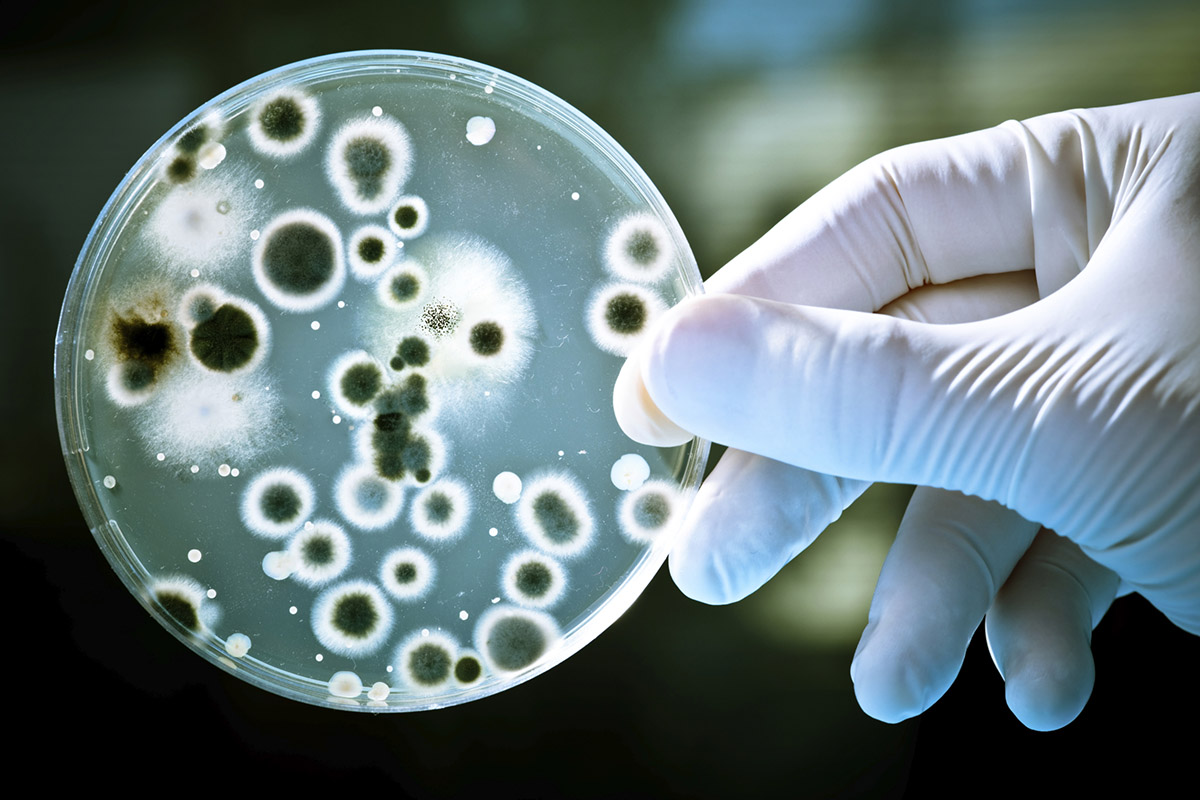 Eğe University Scientists Discovered a New Bacteria