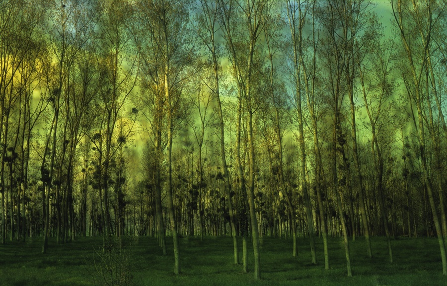 Forest Landscape will be restored in the Caucasus and Central Asia